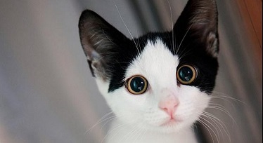 Pentru iubitorii de pisici